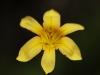 2007-brooklyn-botanical-gdns-march-2007