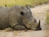 Relaxing Rhino