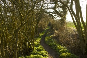 Icknield Way in Hadstock